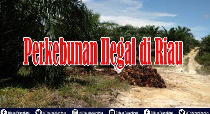 TERUNGKAP, 58 Ribu Ha Lahan Perkebunan di Riau Ilegal, Masuk Kawasan Hutan, Dikuasai 32 Perusahaan